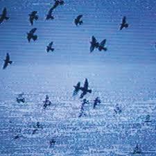 Track Of The Day #283: Field Harmonics – 'Everyone (edit)'